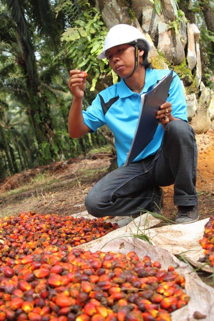 Would banning palm oil really improve sustainability?